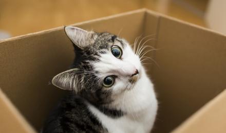 Met je kat verhuizen - zo houd je het stressvrij