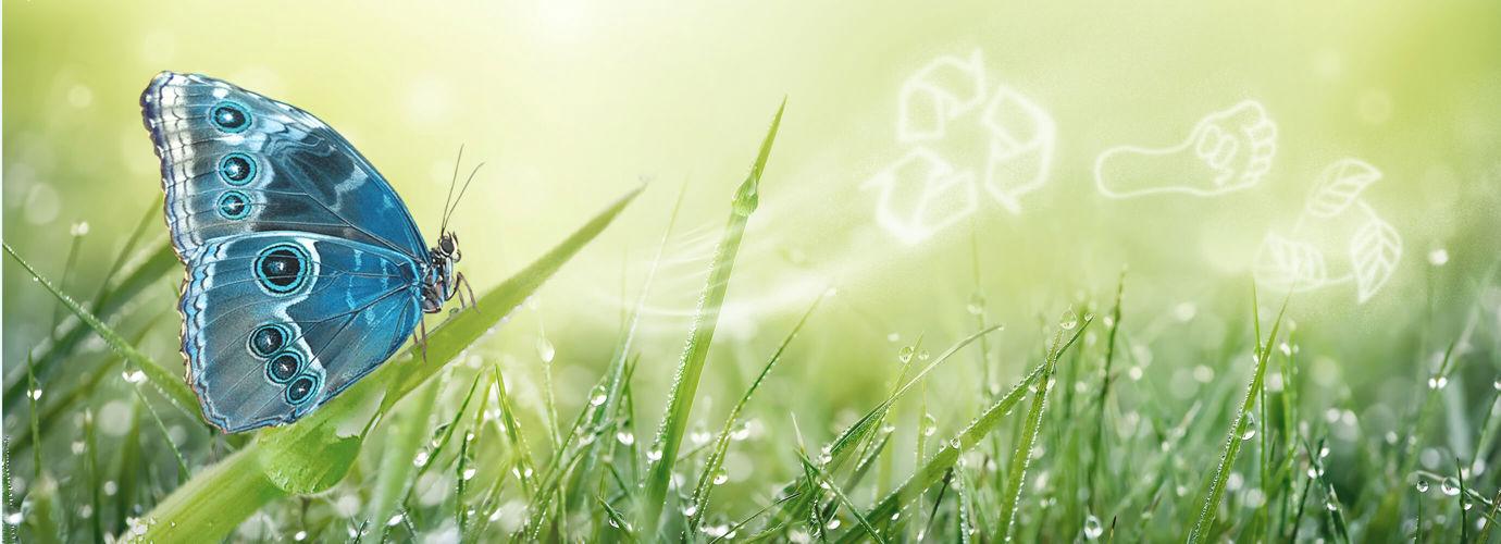 Nous nous engageons à réduire notre impact environnemental