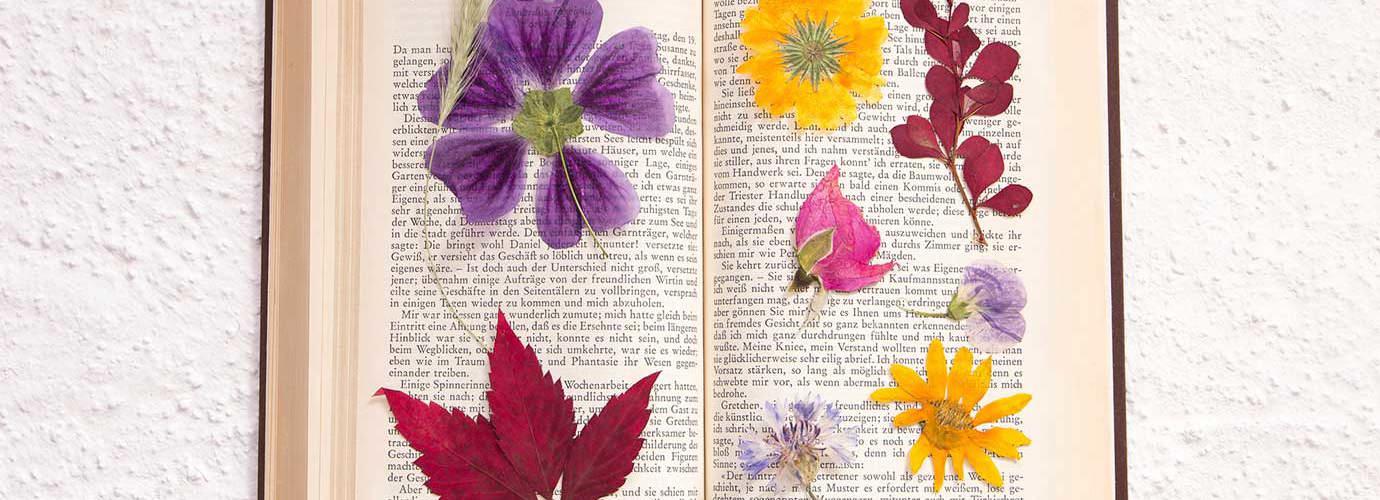 Fleurs séchées dans un livre ouvert