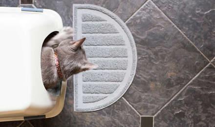 Un chaton dans un bac à litière propre