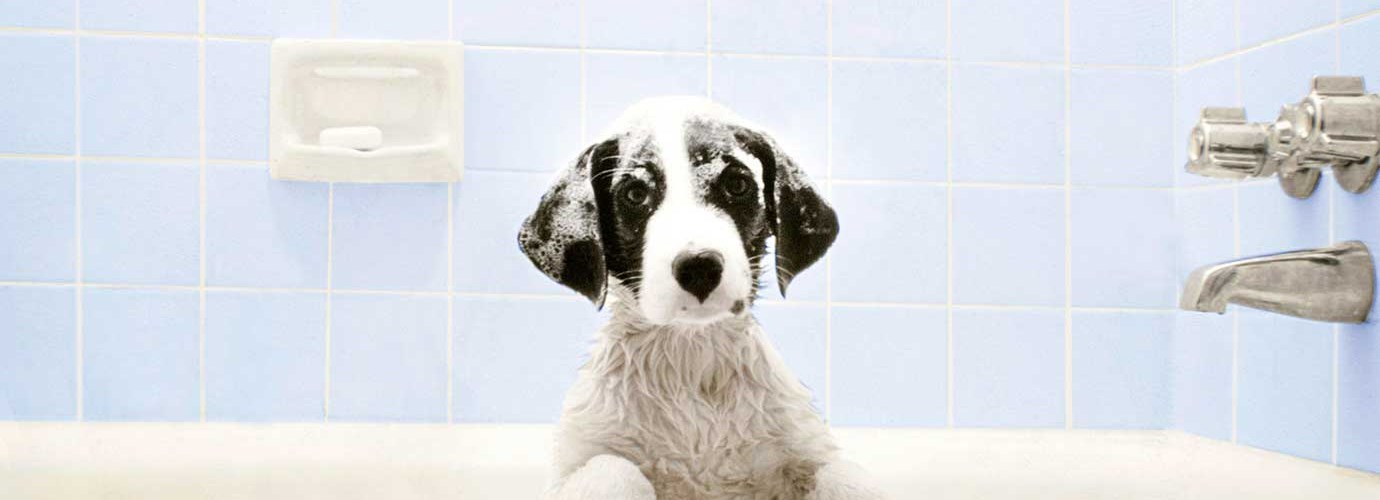 Un chien dans la baignoire attend l'heure du bain