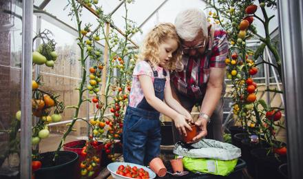 Comment faire mûrir des tomates vertes de 3 façons
