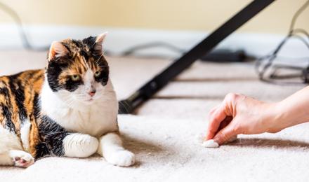 Comment enlever l'odeur d'urine de chat sur un tapis